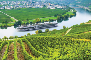Vineyard in the Rhine Valley