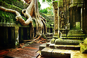 Ta Prohm at Angkor Wat, Cambodia