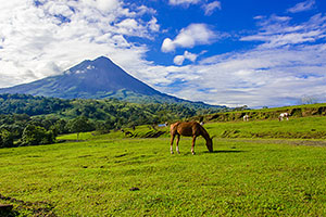 Arenal Volcanco, horses in foreground