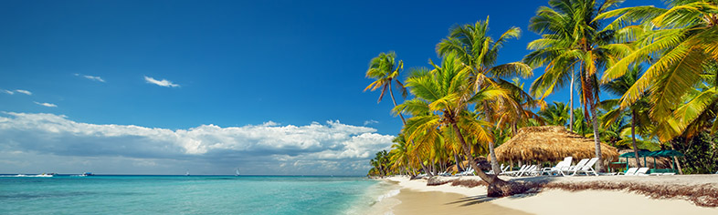 Pristine Caribbean beach with palms