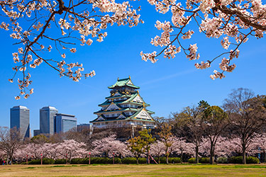 Osaka castle in cherry blossom season, Japan