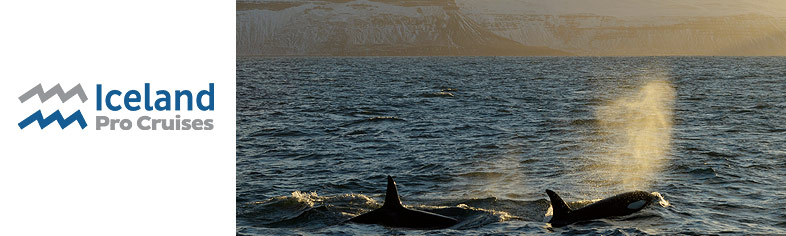 Whale watching on Iceland ProCruises
