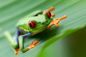 Tree Frog in Jungle